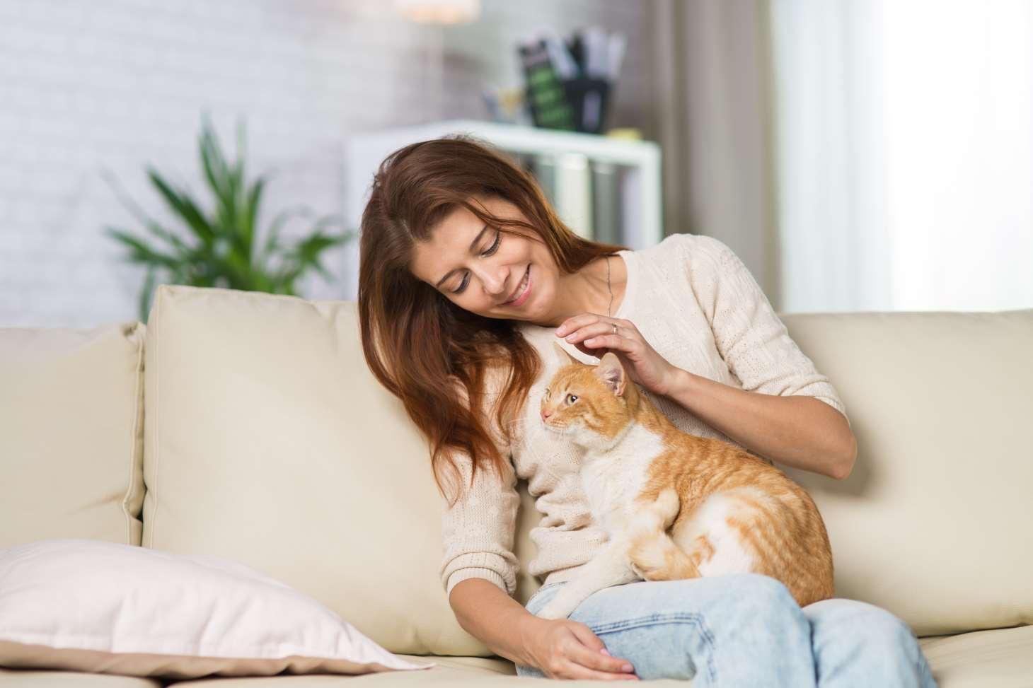 banniere comparateur mutuelle chat